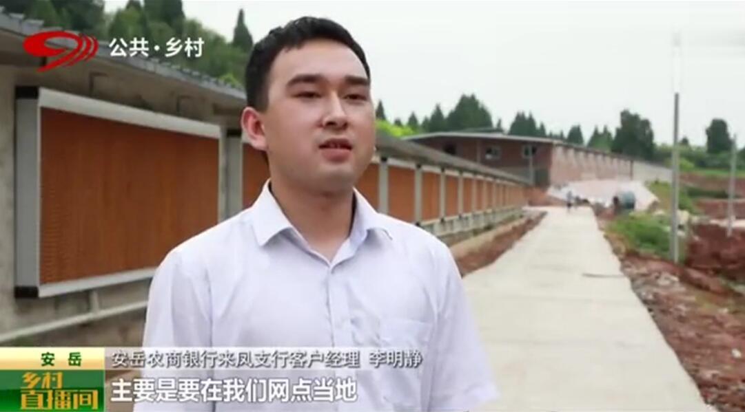 """生猪大县安岳:助力生猪养殖""""金猪贷""""破解融资瓶颈"""