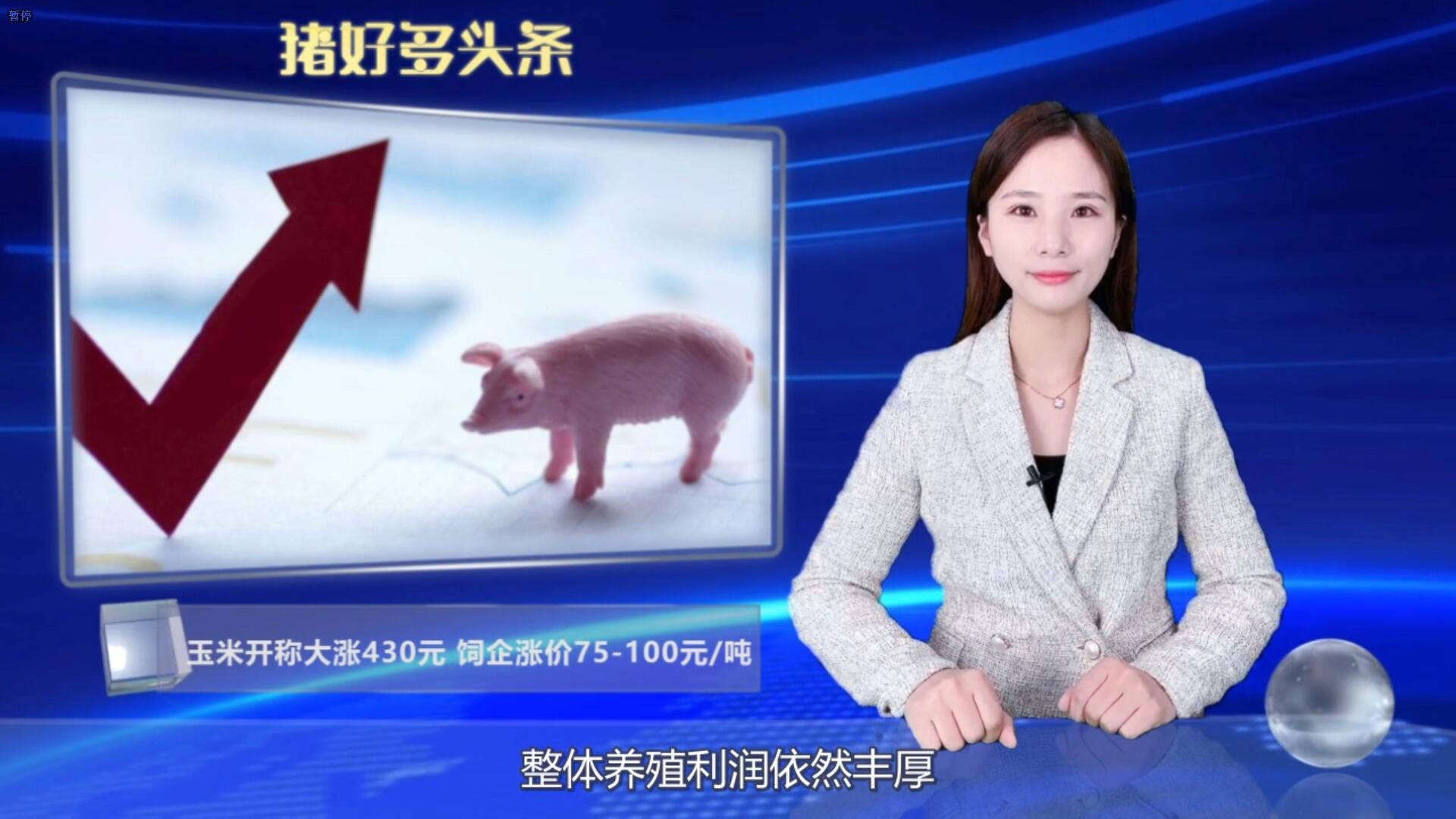 """玉米开秤价大涨430元,猪料涨价75-100元/吨,养殖利润""""缩水""""!"""