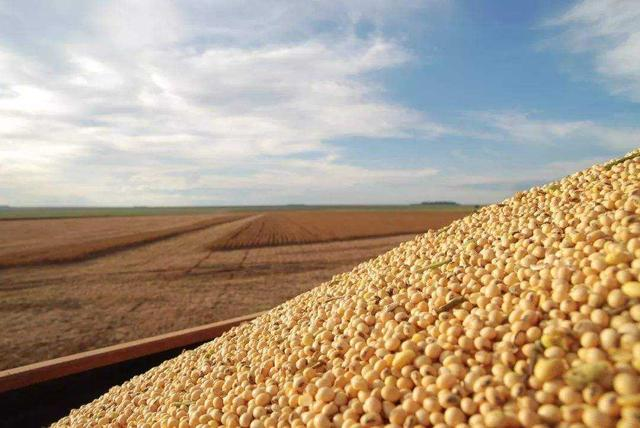 阿根廷宣布下调3%大豆关税,美国紧张了:这是要抢生意?