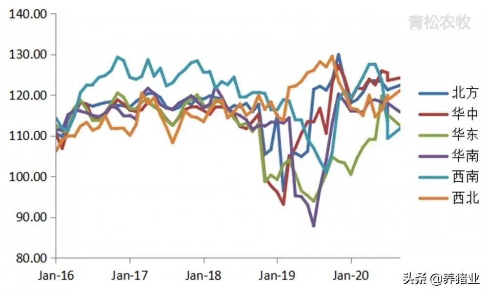 生猪产能继续恢复,生猪出栏显现积压,下半年猪价下跌概率大