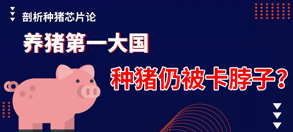 养猪第一大国,种猪仍被卡脖子? 剖析种猪芯片论