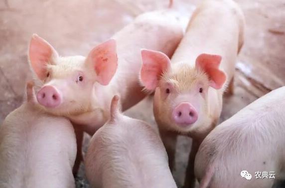 黑龙江:11月4日起,外省进入我省动物和动物产品须走指定通道