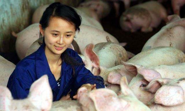 生猪价格接连下跌,有位养殖户躲过一劫,因为他听了一番话