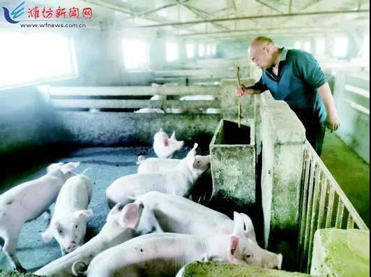 """20年养鸡大户改养猪!""""只要猪价不低于12元/公斤,我都能赚着钱!"""""""