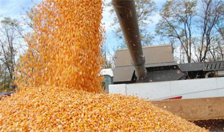 10月16日饲料原料,饲料年内第七次涨价,玉米豆粕后市欲将如何?