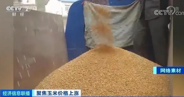 玉米价格创近4年新高,玉米加工下游产品涨价!原因何在