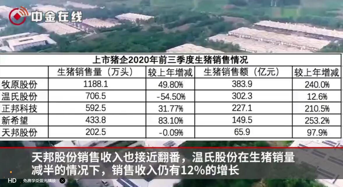 五大猪企三季度成绩单出炉:猪价位于高位,养猪利润大幅增长
