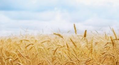 国家统计局李锁强:全年粮食生产有望再获丰收 生猪生产稳步恢复