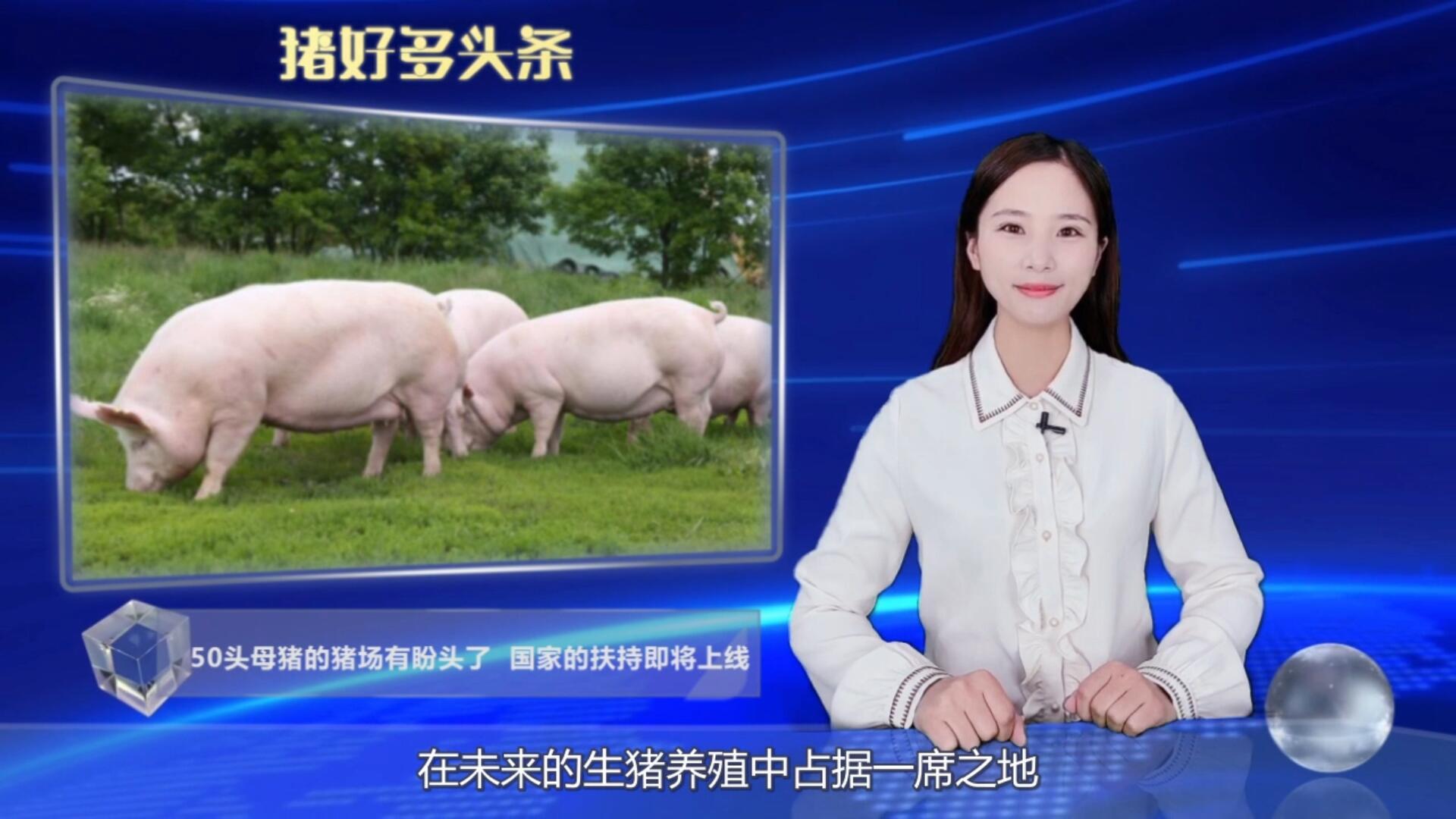 好消息!针对30-50头母猪的小型猪场国家的扶持政策来了!