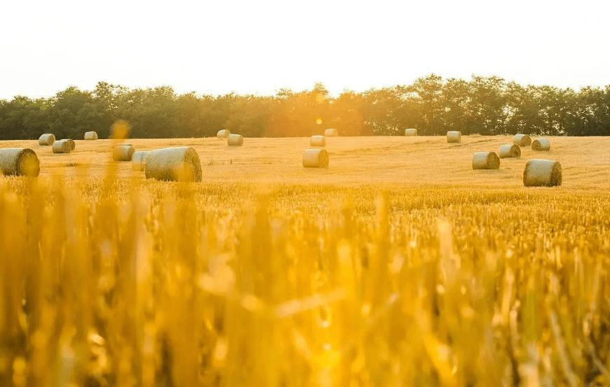 """10月22日饲料原料:小麦是玉米价格""""天花板""""!豆粕还得涨?"""