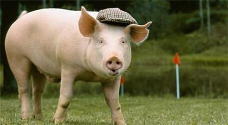 农行生猪全产业链贷款余额超500亿元 帮助养殖户解决资金难题!