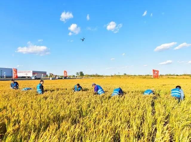 阿里巴巴又出手!中国农业科技转化率不足40%,阿里联合院士+高校助农让农业高科技走出实验室