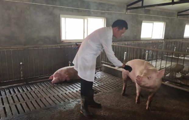 冬季猪场如何处理好保温与通风的平衡,真的两难全吗?