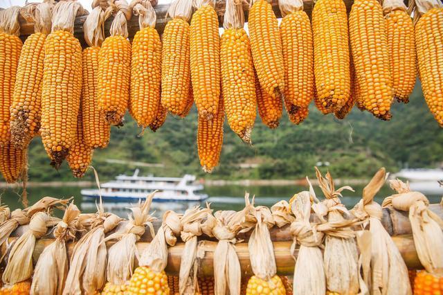 10月25日全国玉米价格行情,玉米价格推涨难以继续,原来是...