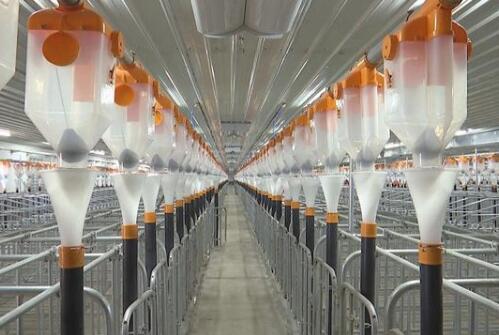 南京12个万头猪场全部投产运营 生猪产业向绿色生态转型