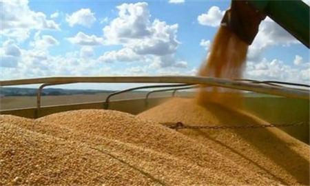 """农业农村部:""""十三五""""期间大豆面积连续5年增加 生猪规模化率达53%"""