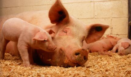 农发行天津东丽支行支持生猪生物制剂研发