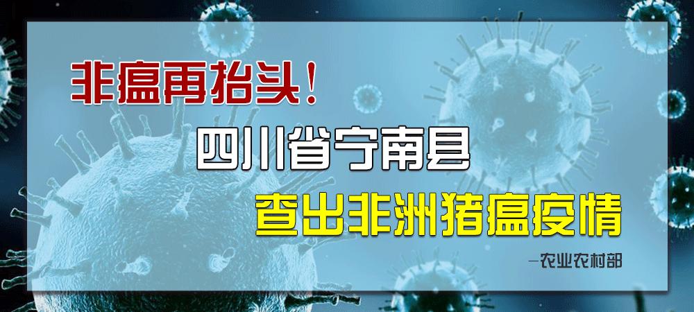 非瘟再抬头!农业农村部:四川省宁南县查出非洲猪瘟疫情