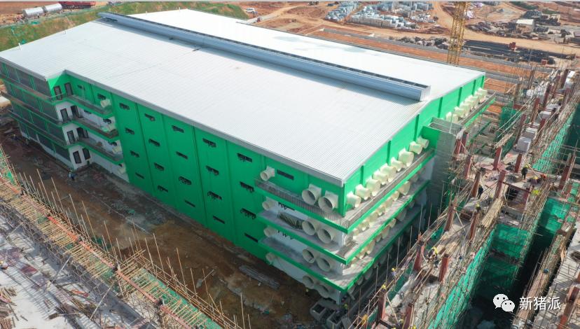 60个项目2024万头产能!楼房猪场能否走出中国特色养殖模式?