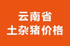 2020年11月24日云南省各市区土杂猪生猪价格行情走势报价
