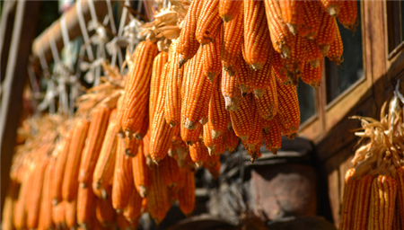 """10月28日饲料原料价格:玉米价格或已""""见顶"""",豆粕陷入涨跌两难"""