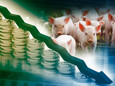 近期猪价分析