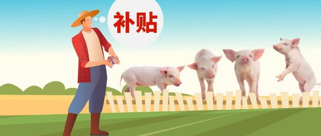 2亿元生猪出栏补贴大红包,你领到了吗?