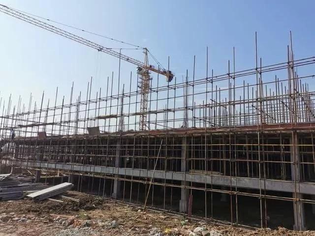 年出栏生猪35万头 扬州最大生猪基地明年4月投产
