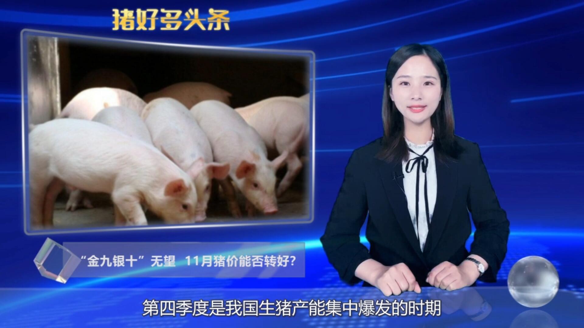 """""""金九银十""""无望,11月猪价能否转好?3个消息还你满意答卷!"""