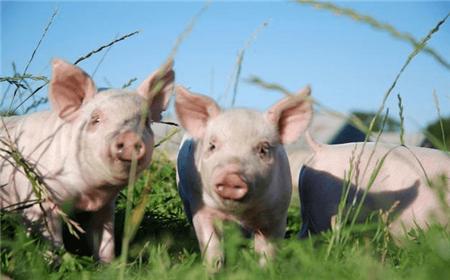 """中华财险与国联期货联合开展生猪饲料成本""""保险+期货""""精准扶贫项目培训会"""