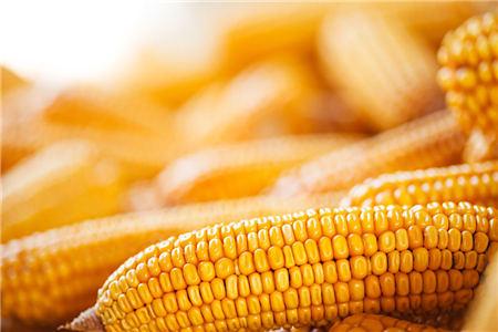 11月4日饲料原料,农户把握好玉米售卖节奏,豆粕价格终是跌了