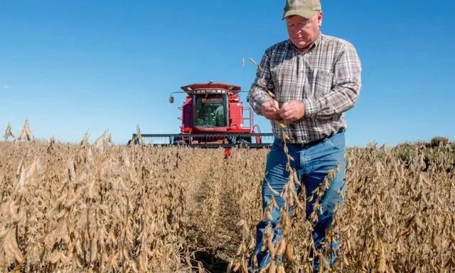 中国已购230亿美元美国农产品,外媒:中国正降低对美国大豆的依赖
