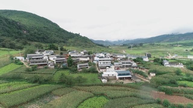 """云南施甸:生猪变""""金猪"""",2亿现金鼓起了村民的钱袋子"""