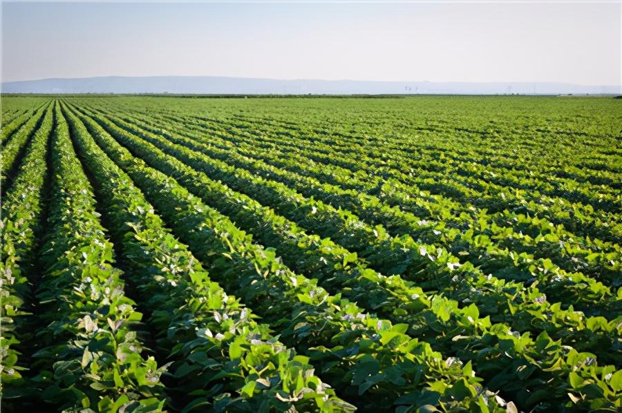 11月5日饲料原料,玉米达到心理价位售粮积极,豆粕利空累积