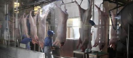 黑龙江省生猪存栏1321万头 接近历史同期最好水平