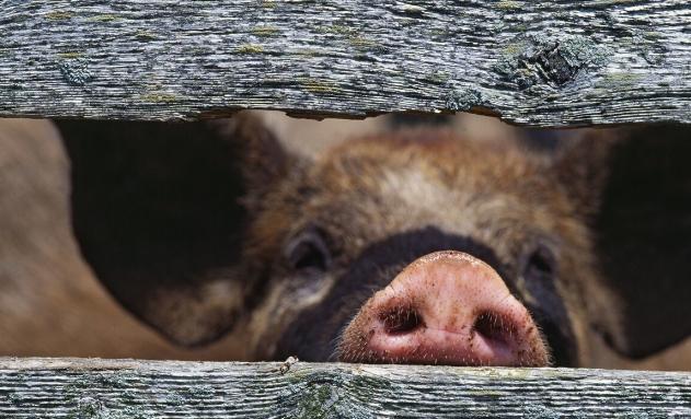 关注!县政府将他的猪场划入禁养区?其律师要求审查文件合法性