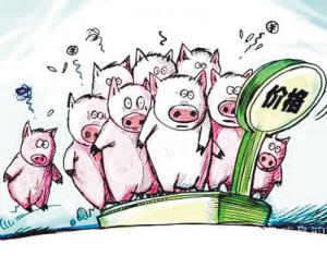"""11月11日生猪价格,跌得""""理直气壮""""?猪肉降价再度冲上热搜"""