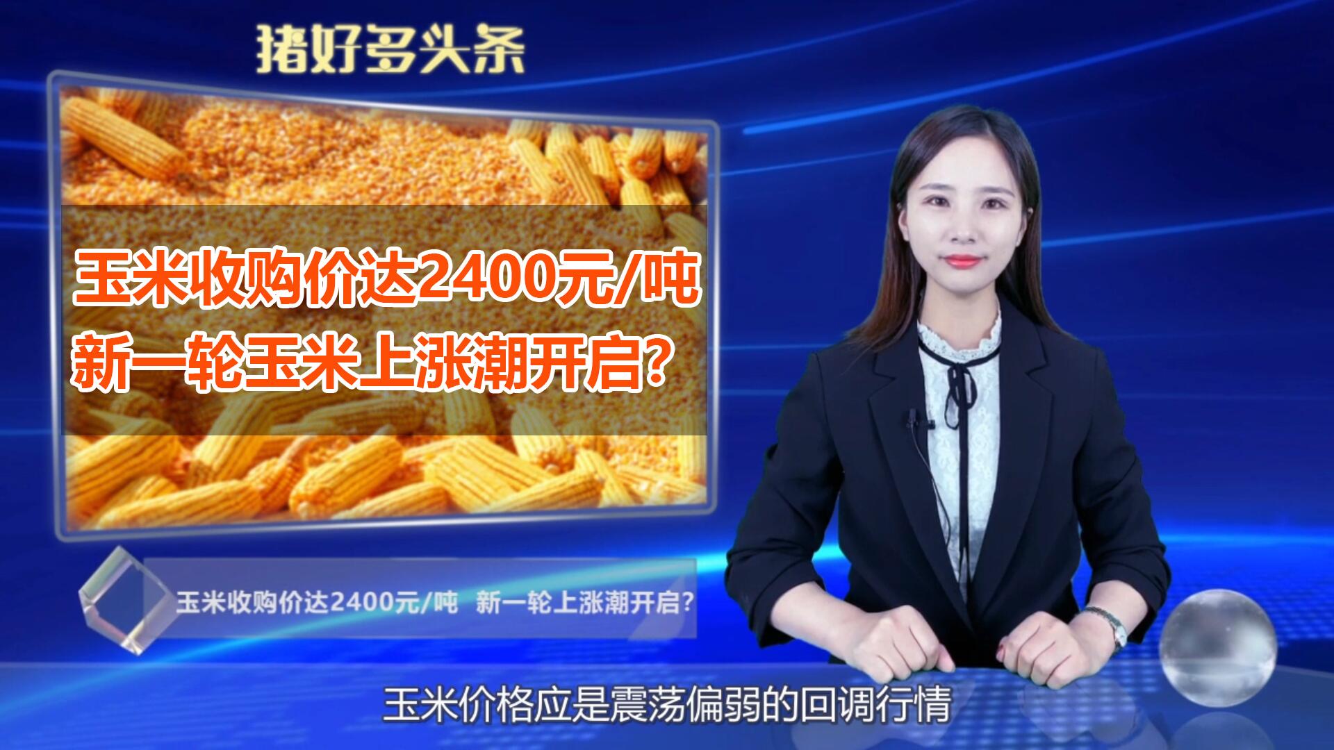 中储粮开收玉米了!收购价达2400元/吨,新一轮玉米上涨潮开启?