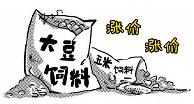 """""""双11""""国内饲料加工企业涨价忙 专家称应辩证把握商机"""