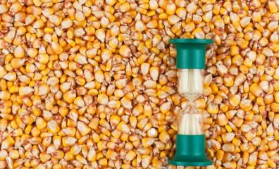 11月12日饲料原料,玉米豆粕涨势均受阻,供需结构发生逆转?
