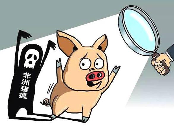一个猪场感染非洲猪瘟,一般什么时候开始大爆发?