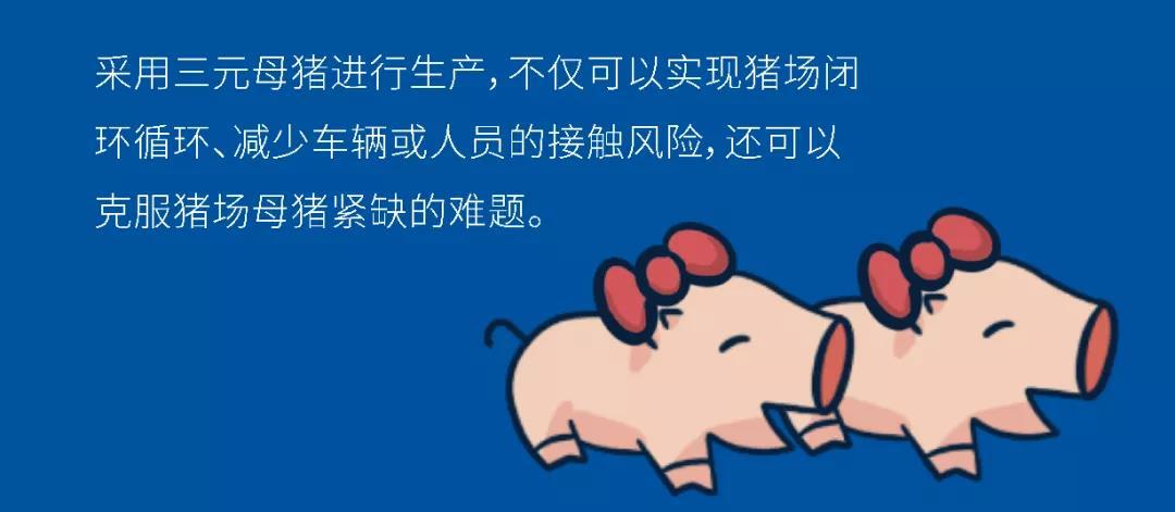 干货   非瘟下猪场利用三元母猪生产的优劣势分析