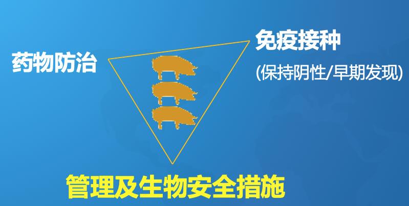 """周斌:新病不断老病复发!控制猪腹泻要落实""""黄金三角""""原则"""