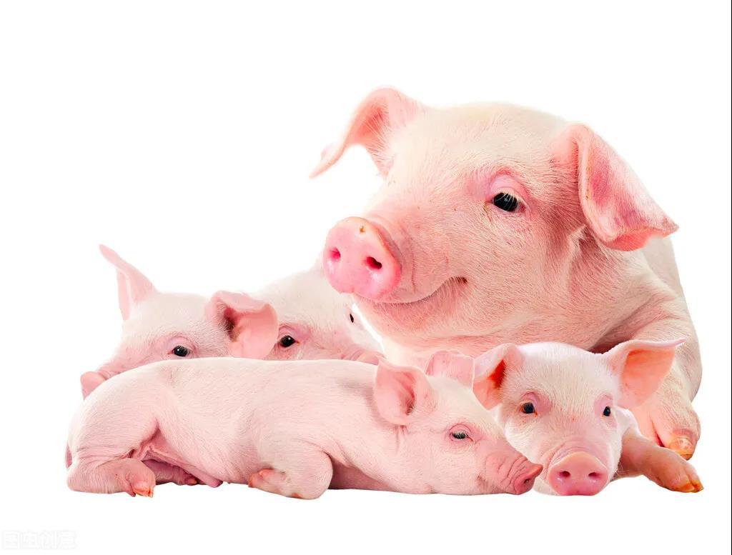 行业观察:猪肉价格拐点到了吗?