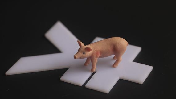 """今年""""祖代种猪""""进口量创新高:猪肉降价全靠它,可惜被外国""""卡脖子"""""""