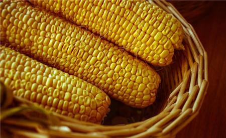 11月20日饲料原料:玉米蓄势待发!中储粮停收大豆,未来走势如何?