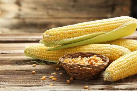 玉米市场价格进入真正市场化阶段