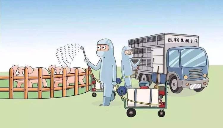四川南充:顺庆区用三个一建立非洲猪瘟疫情隔离带