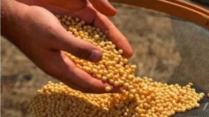 豆粕玉米价格持续飙升,专家:不应仅从供需角度看待农产品价格