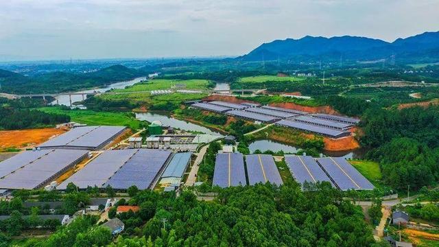 跨市调剂、销区补偿产区……浙江在全国率先破题,推动生猪产业高质量发展